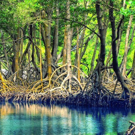manglares los haitises tours