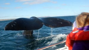 ballenas samana